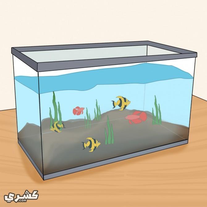 اشتر الأسماك الجيدة