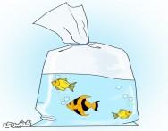 كيف تختار أسماك الزينة